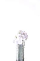 20_cristaten-06hp.jpg